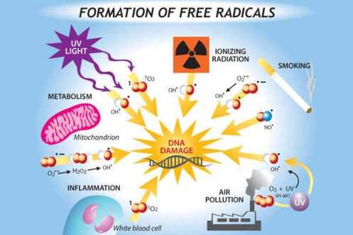 radikal bebas