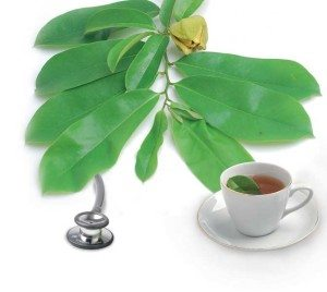 khasiat daun sirsak bagi kesehatan tubuh