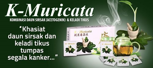 Obat herbal kanker prostat K-muricata